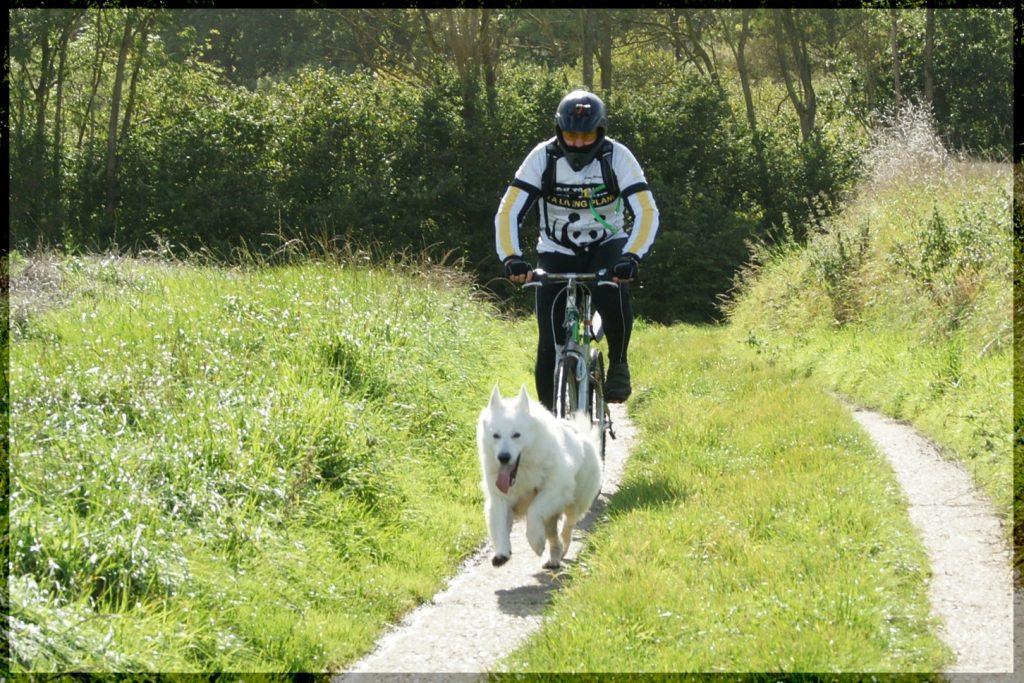 Dog-Sports